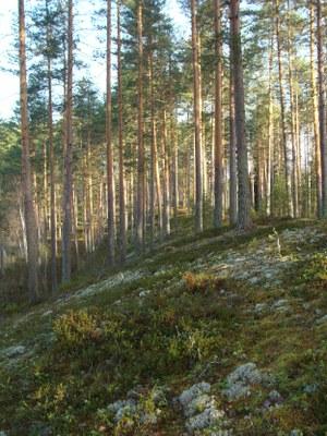Kuva: Erkki Kojo