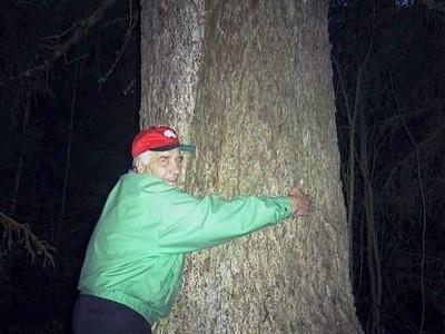 paksu puu