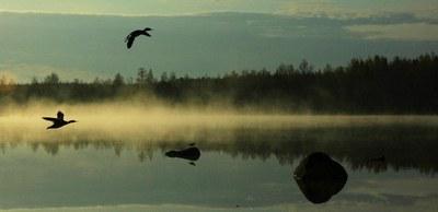 linnut aamutunnelmassa