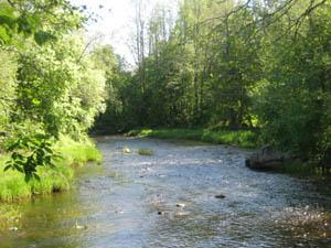 jpg.kaasmarkunjoki